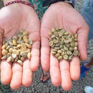 Kopi, Coffee, Cafe, Luwak, Bali, Ubud