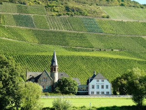 Mosel, wine country, germany, green, nature, travel 2016