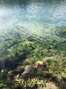 fuse,lake,sparkling water, alp, see,lake
