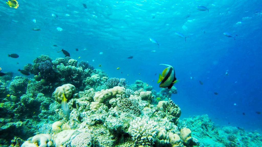 Diving, underwater, egypt, sharm el sheikh, fish, blue sea, girl, blog, blogger, miriam ernst, be-sparkling