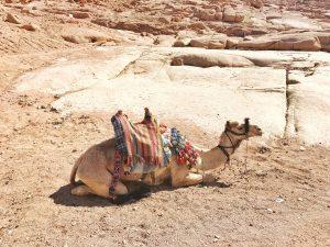 camel, desert, wüste, kamen