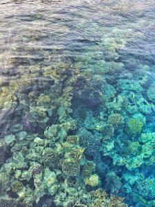 sharm-el-sheikh-corals-colourful-underwater