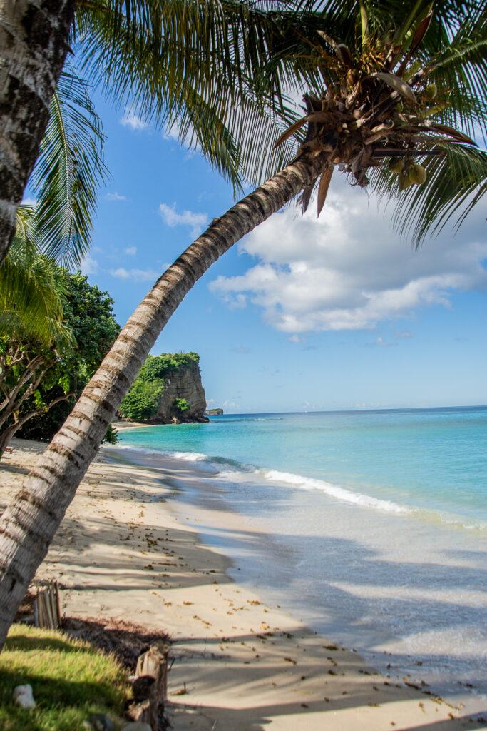 Grenada, Grand Grooms Strand, Karibik, Strand, Meer, Palme, Urlaub