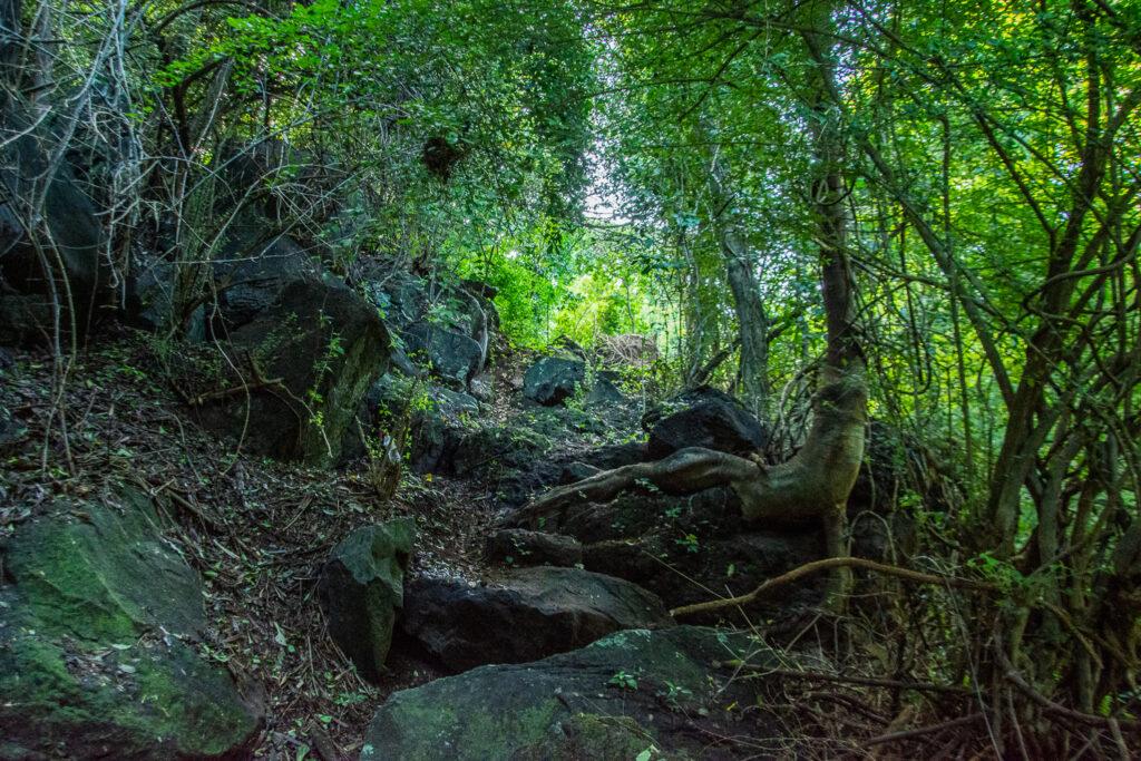 Grenada, Schnitzeljagd, Hash, Wald, Bäume, Karibik