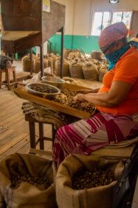 Grendada, Hände, Schokoladenbohnen, Karibik, Schokoladenfabrik