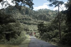 Grenada, Dschungel, Karibik, Natur, Wald